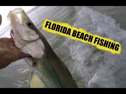 South Florida  Beach Fishing With Live Bait