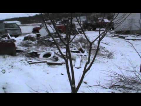 Pruning Dwarf Apple, Cherry, and Pear Trees~Goat Damaged Branches