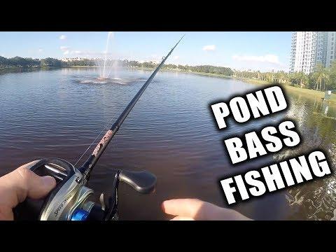 Florida Urban Pond Bass Fishing!