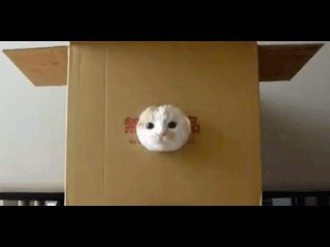 How to make a really awesome cat condo out of a box!