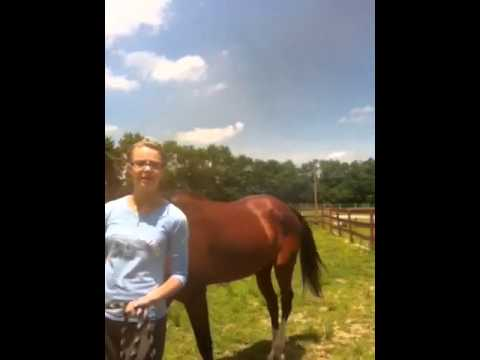 How to put on a halter and lead a horse!