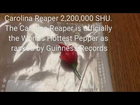 Carolina Reaper - Challenge Accepted