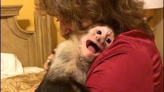 Capuchin Monkey Missed Grandma!!