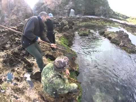 Catching crayfish with a mate (Fiordland, NZ)