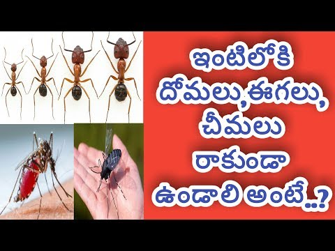 How to Avoid Ants and Mosquitoes out of your Home   How To Get Avoid of Ants, Mosquitoes in Telugu