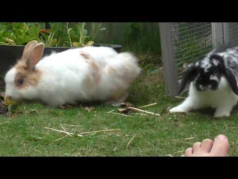 bunny montage