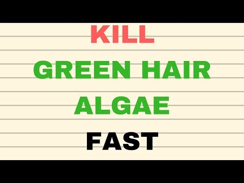 how to get rid of green hair algae for good
