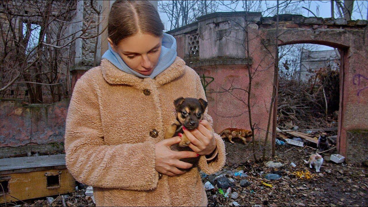 Tiny Stray Puppy Raised by Cats at Cat's Colony