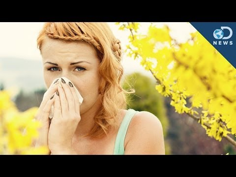 Why Do We Get Allergies?