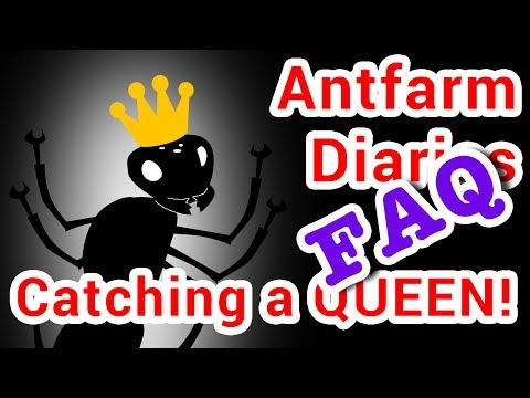 FAQ #1: How to catch an ant queen?