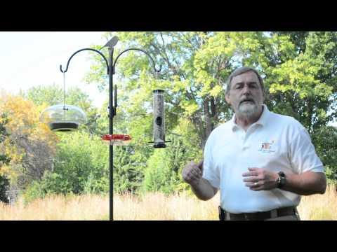 Help Your Birds Survive Extreme Heat & Drought