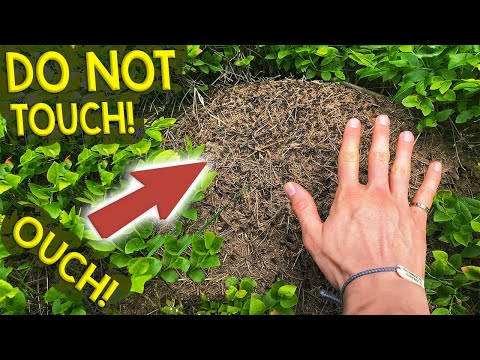 Finding Queen Ants & Colonies | My Trip to the Black Forest, Germany