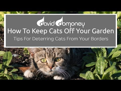 Top tips for keeping cats off your garden