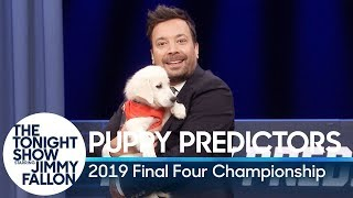 Puppies Predict the 2019 Final Four Championship
