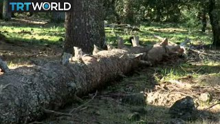 Morocco Forests: Country starts tree-replanting programme