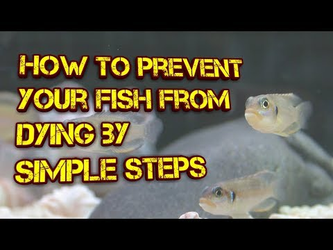 How to prevent your fish from dying by simple steps