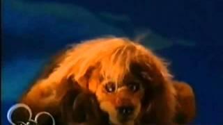 "Muppets Tonight - ""The Lion Sleeps Tonight"""