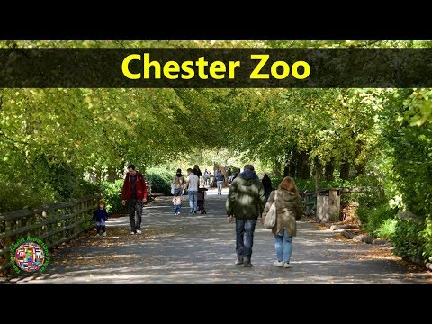 Best Tourist Attractions Places To Travel In UK-England | Chester Zoo Destination Spot