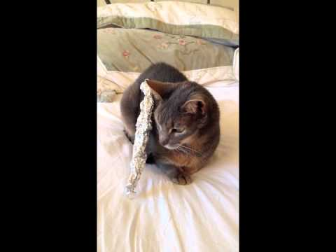 cat takes forever to notice tin foil