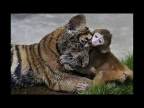 china zoo - china zoo tiger feeding - china zoo bear eats monkey