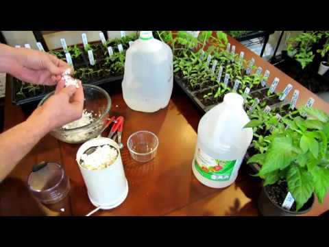 How to Make an Eggshell & Vinegar Fertilizer to Manage Blossom End Rot - Recipe & Use:  TRG DIY Ep-2