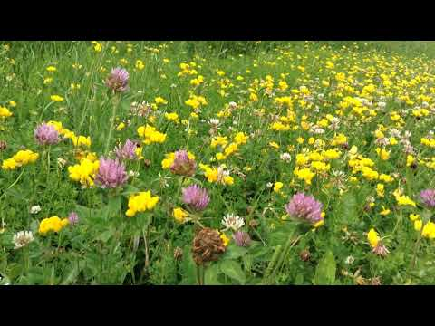 Clover & Wildflowers - Quiet Moments