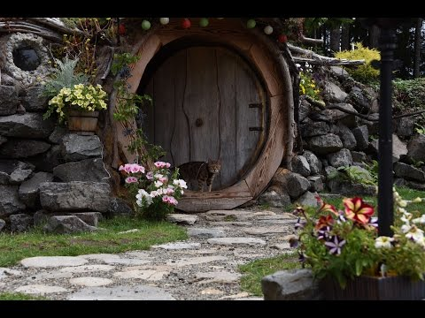 A Bengal Catified Hobbit Hole