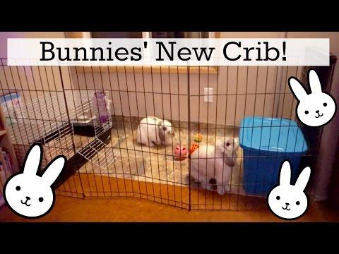 The Bunnies' New Indoor X-Pen Setup