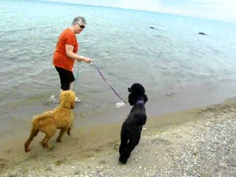Quincy and Journey at Lake Huron. She is adventurous!