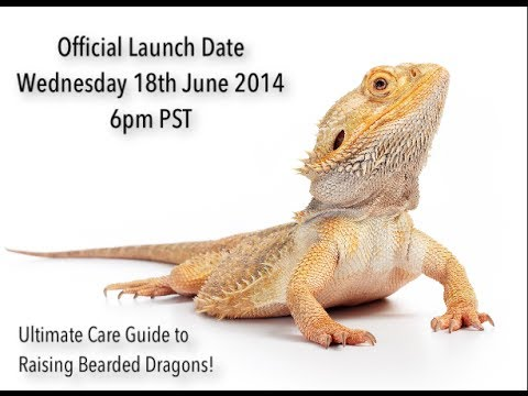 Sneak Preview to The Ultimate Guide to Raising Bearded Dragons Care Sheet