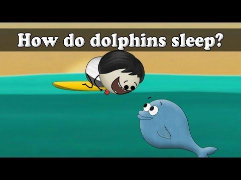 How do dolphins sleep?   It's AumSum Time