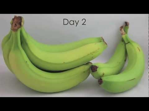 Bananas Ripening-Time Lapse