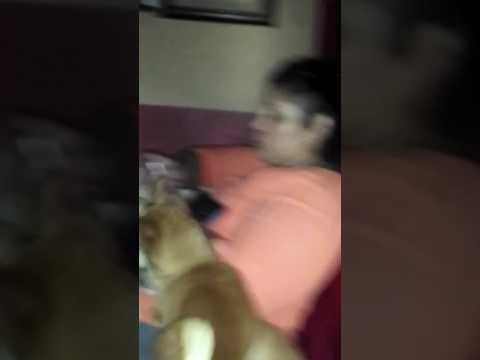 Mexican mom goes off on dogs