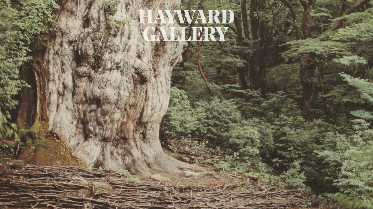 Among the Trees - Walking Among Giants: The Lifespan of Trees | Hayward Gallery