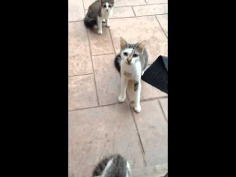 How to scare cats with dog barking sound effects with a bluetooh powered speaker and a iphone