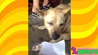 Just Take the Money - Dog Funny