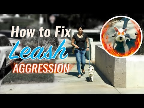How To Fix Leash Aggression and Introduce Dogs
