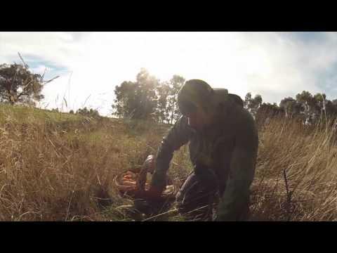 Mushroom Foraging Victoria Australia