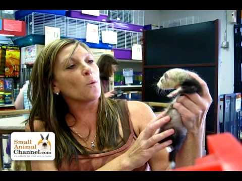 Pet Ferret Care Information - SmallAnimalChannel.com