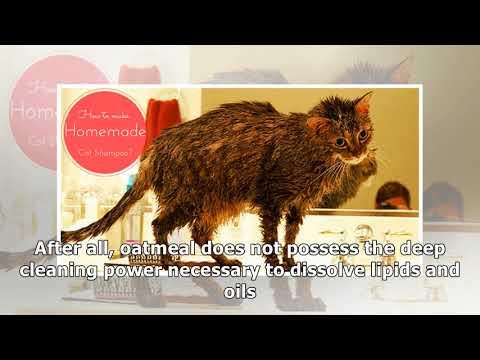 Make Homemade Cat Shampoo
