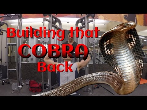 (LATS) Building that COBRA Back with Seated Straight Arm Lat Pushdowns
