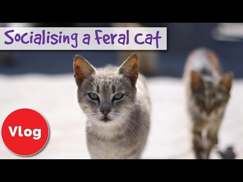 How to Socialise a Feral or Stray Cat! Tips To Help Turn a Feral Cat to Friendly Cat + COMPETITION!