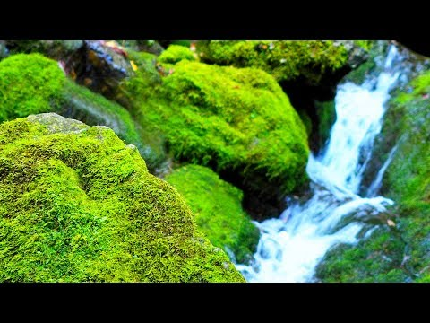 Relaxing Guitar Music | Peaceful Music for Meditation, Stress Relief, Massage