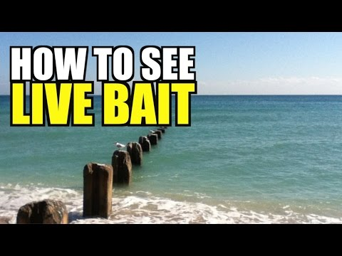 How To See Bait Fish (Mullet)