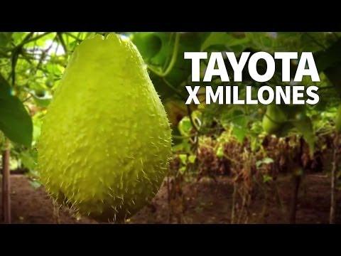 Tayota por millones