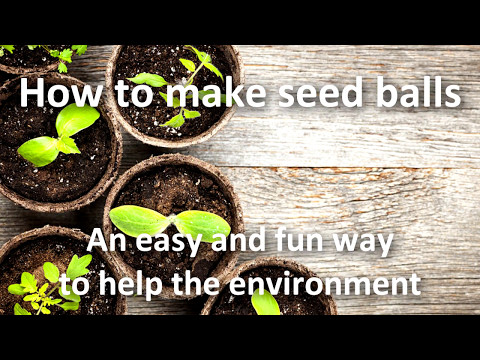 How to make seedballs - Sustainabilitybox.com