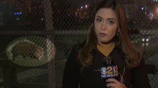 Opossum Videobombs New York Reporter on Live TV