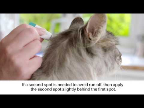 Bravecto Topical Solution: How to Apply on Cats