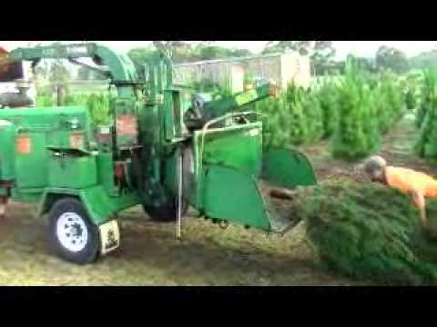 Recycling Christmas Trees after Christmas at Dural Christmas Tree Farm