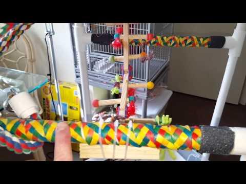 Rebuilt, Refurbished DIY PVC pipe parrot playgym